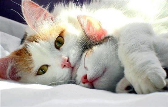 sarılan kediler