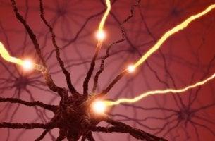 sinir-bağlantıları