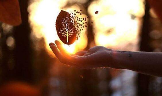 havada dağılan yaprak