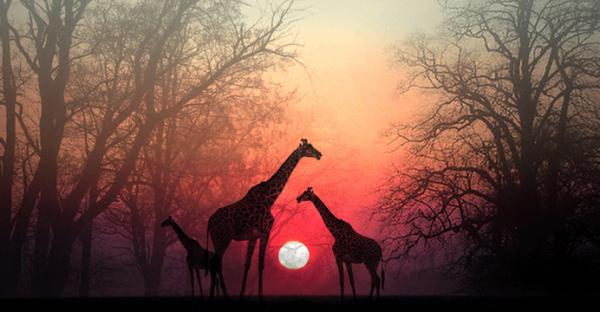 Ruhunuzun Sizi Yakalamasına İzin Verin: Güzel Bir Afrika Hikayesi