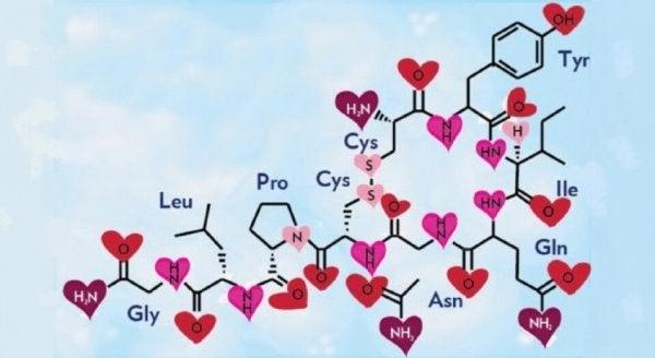 aşık olmanın kimyası