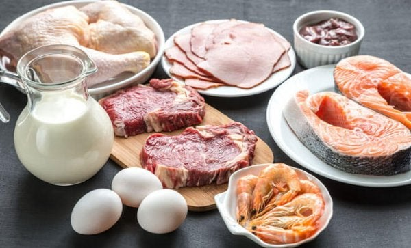 hayvansal protein