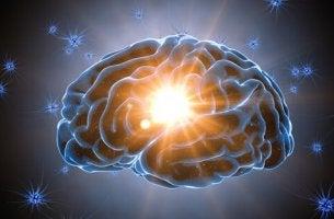parlak beyin