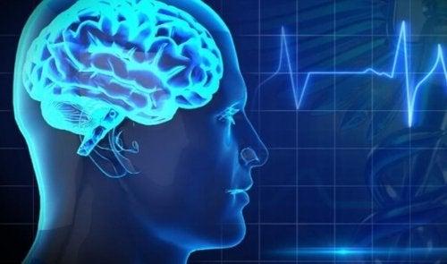 Beyin İçin Zararlı 5 Besin