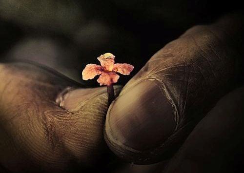 elinde minicik çiçek