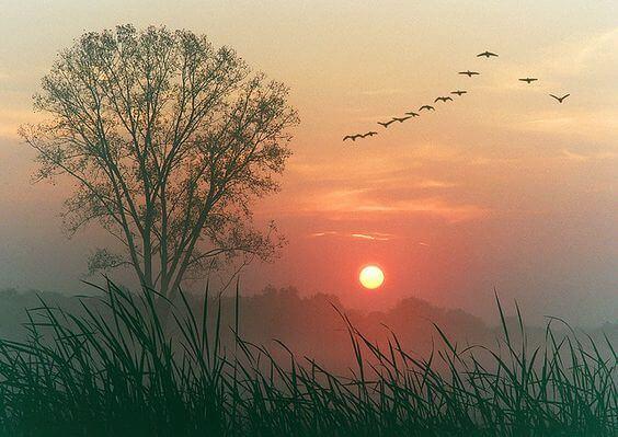 gün batımında ağaç ve uçan kuşlar