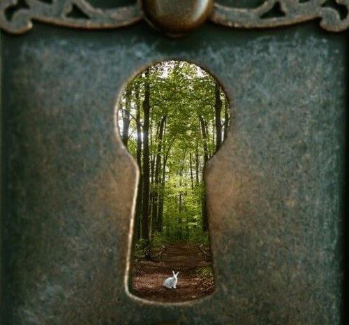 kapı deliği orman tavşan