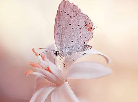 pembe çiçekte pembe kelebek
