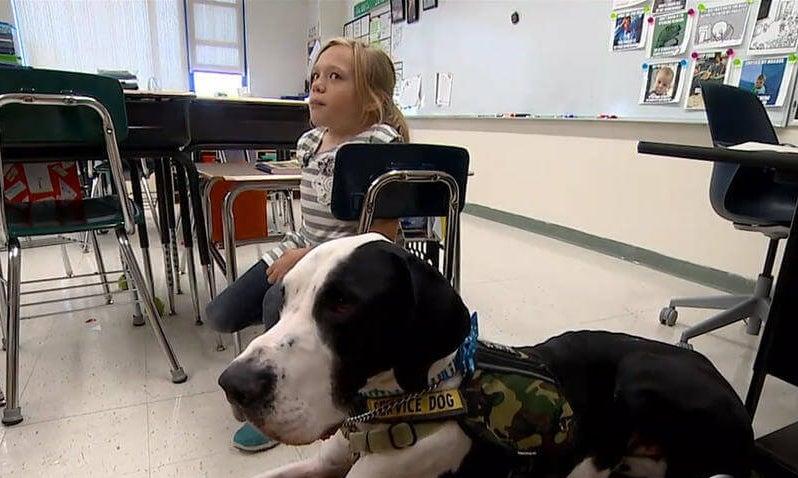 köpek george ve bella sınıfta