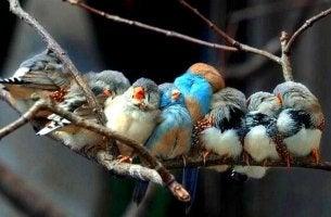 dala konmuş kuşlar