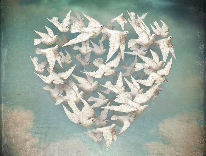 uçan kuşlardan oluşan kalp