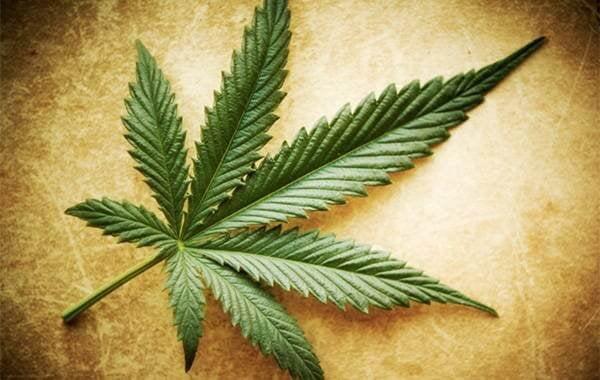 Marihuana ile İlgili Efsaneler, Gerçekler ve Yarım Yamalak Doğrular
