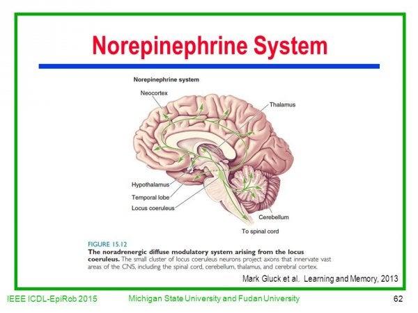 norepinefrin sistem görseli