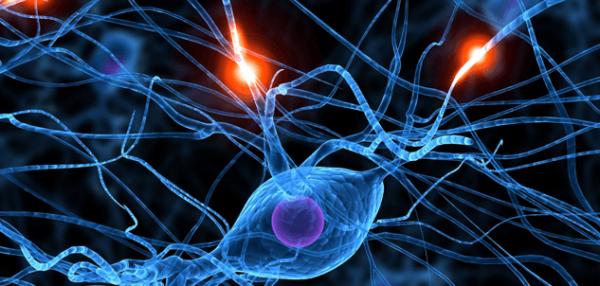 sinir hücrelerini gösteren bir fotoğraf