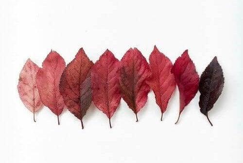 kırmızı yapraklar