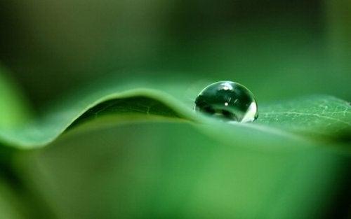 bir su damlası yaprak üstünde