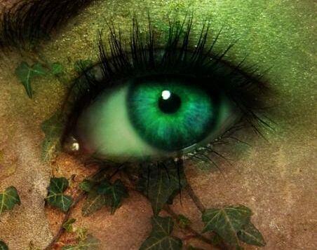 yapraklar ve göz