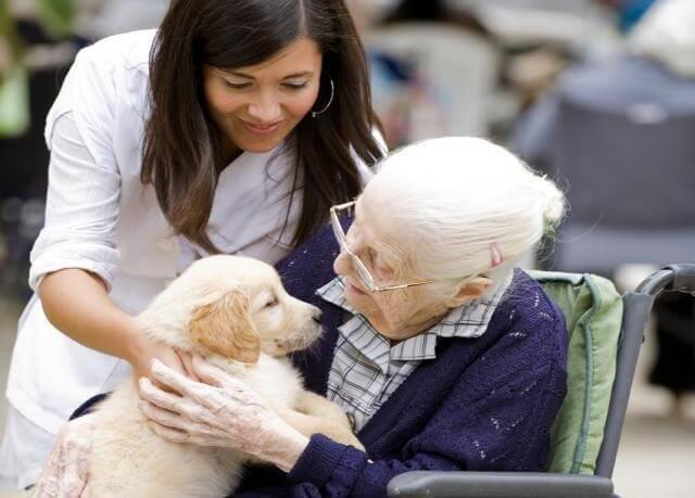yaşlı kadın köpek ve hemşire