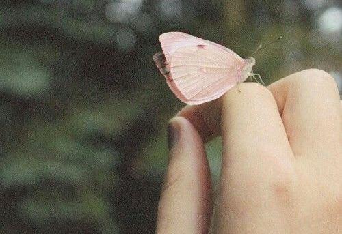 elde kelebek
