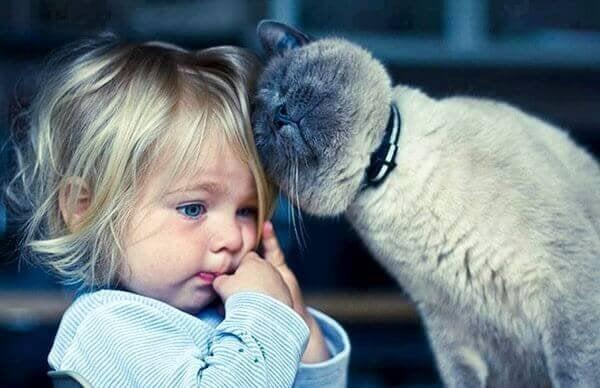 Kedi Terapisi: Kedilerle Yaşamanın 5 Faydası
