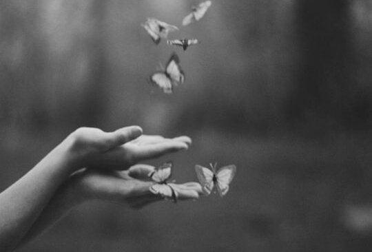 elden uçan kelebekler