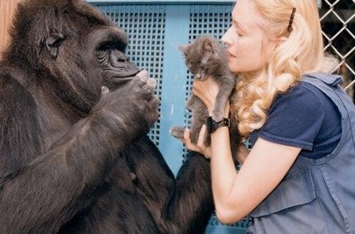 """Dünya""""nın En Zeki Gorili Koko""""nun Tatlı Hikâyesi"""
