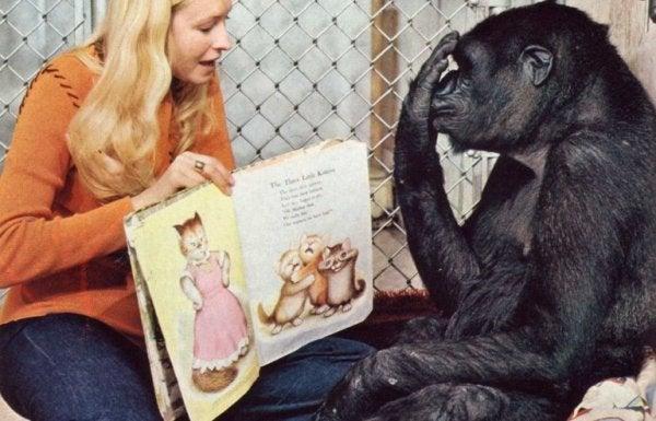 koko ve hikaye kitabı
