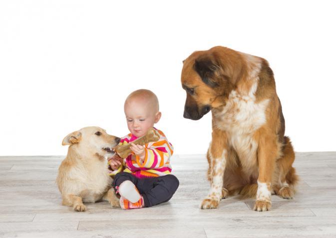 köpekler birbirlerinden bebeği kıskanıyor