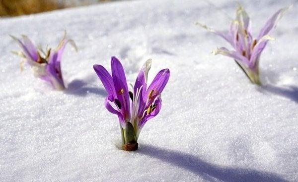 karda çiçek