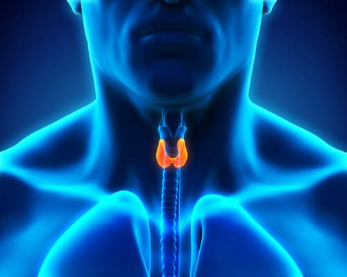 Tiroid Problemi Yaşadığınızda Neler Olur?