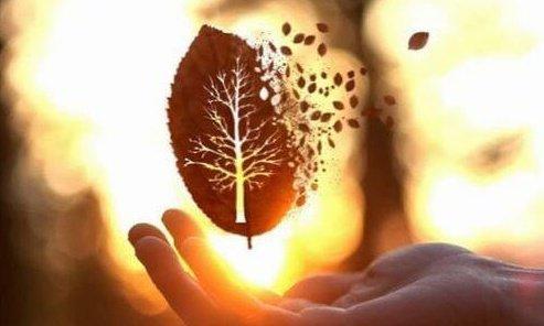üstünde ağaç şekli olan yaprak el