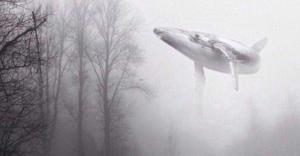 suda uçan balina