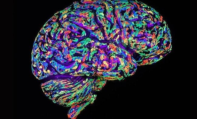 rengarenk beyin