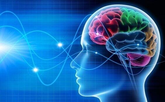Beyin Dalgaları: Delta, Teta, Alfa, Beta ve Gama