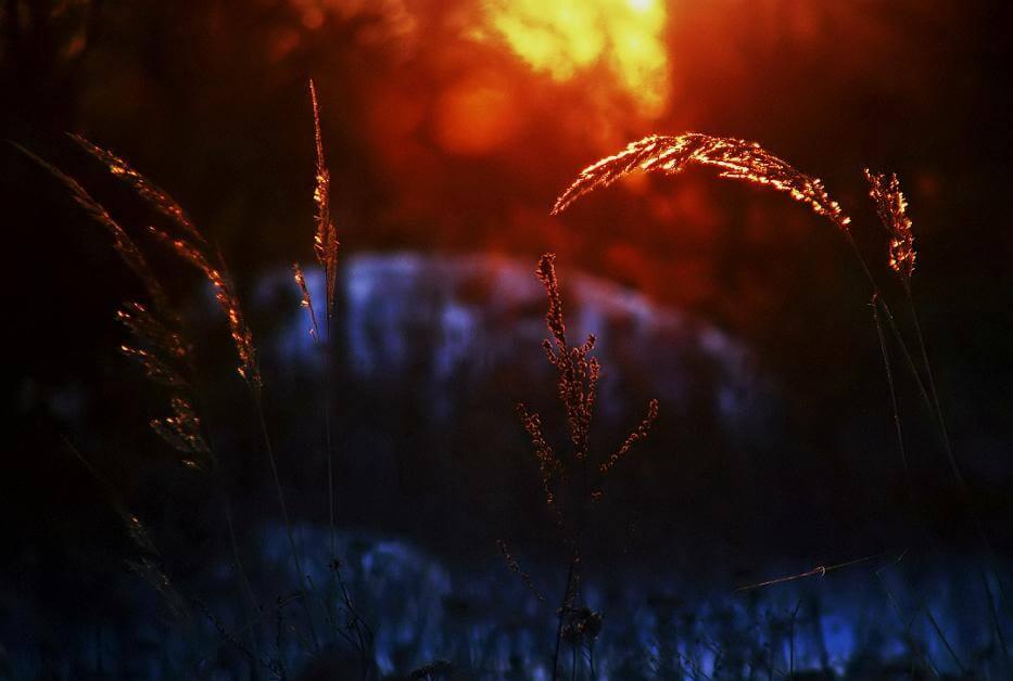 buğday tarlasında güneş batıyor