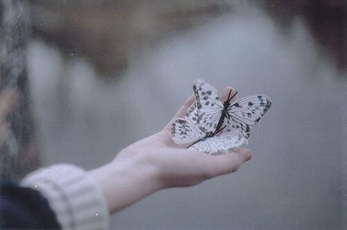 bir avuç kelebek
