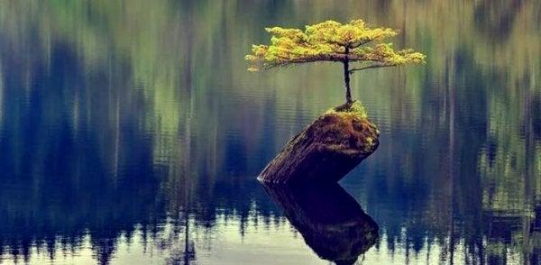 göl ortasında hayata tutunan ağaç