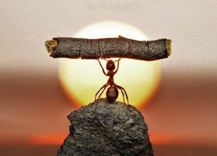 güçlü karınca