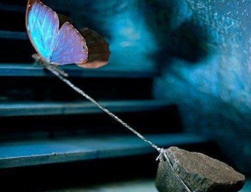 taş yüklü kelebek