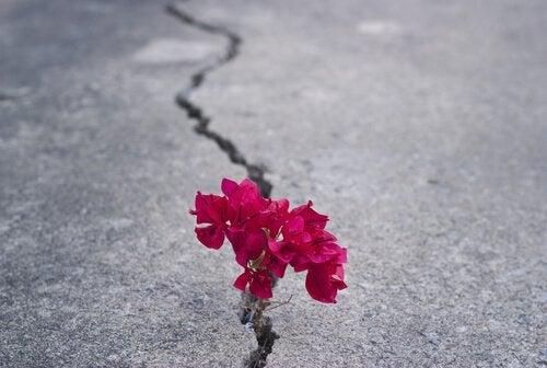 asfaltta biten kırmızı çiçek