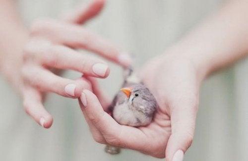 bir avuç kuş