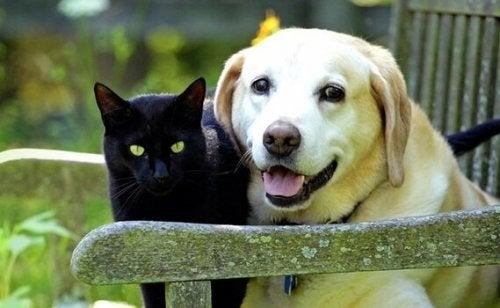 Ev Hayvanınızın Yasını Tutmak: Sevgili Hayvan Dostunuzun Kaybı