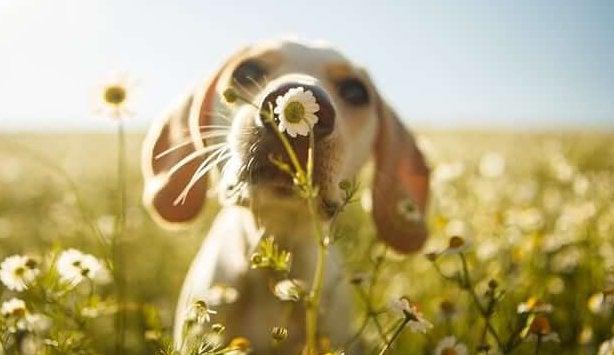 çiçek koklayan köpek