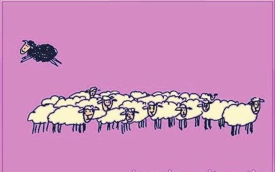 beyaz koyun sürüsü ve sürüden atılan siyah koyun