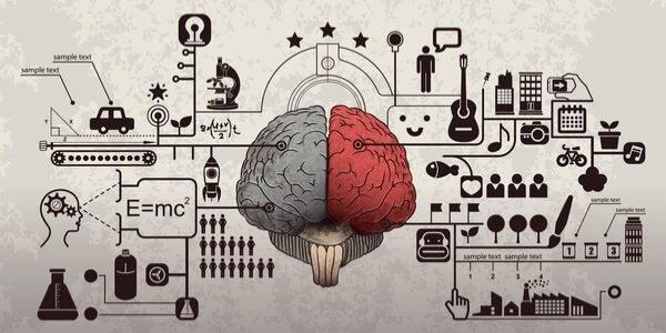 beynin işleyişi
