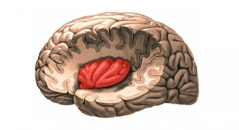 beyinde insula bölgesi
