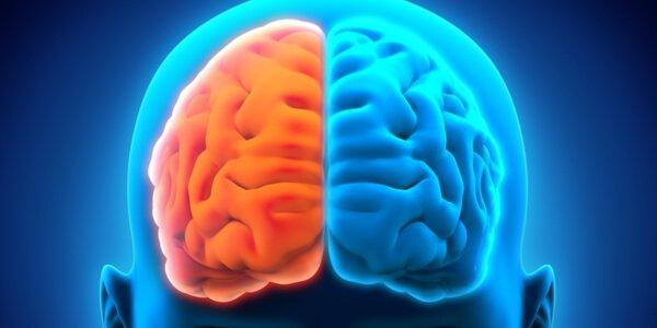 beynin iki yarım küresi