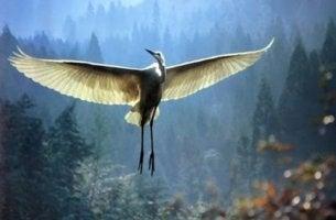 kanatları açık beyaz turna kuşu