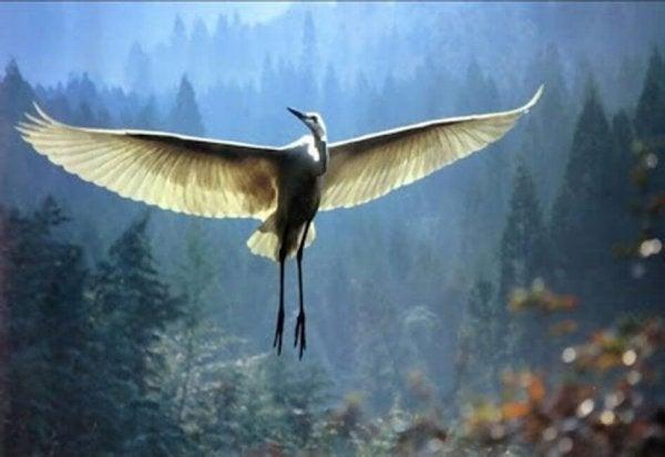 Yaşlı Adam Ve Turna Kuşunun Dokunaklı Hikayesi