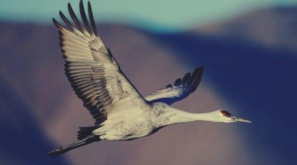 havada uçan turna kuşu